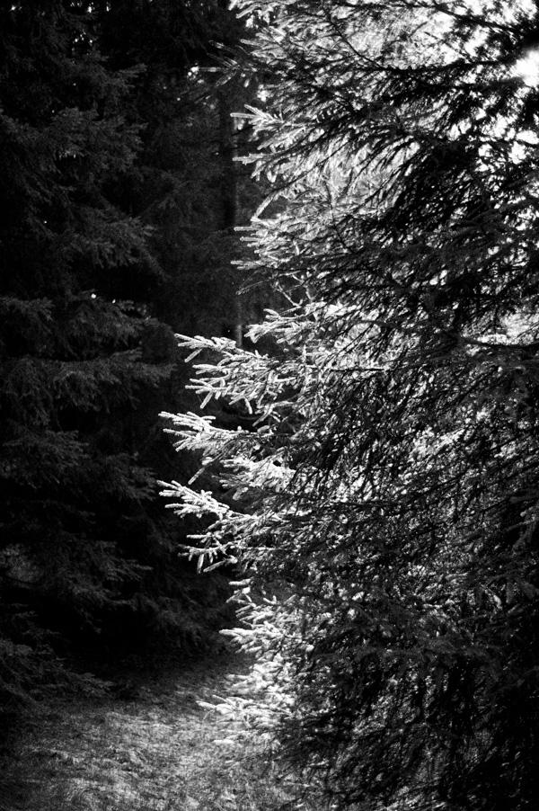 wolf_20140423_042-Edit