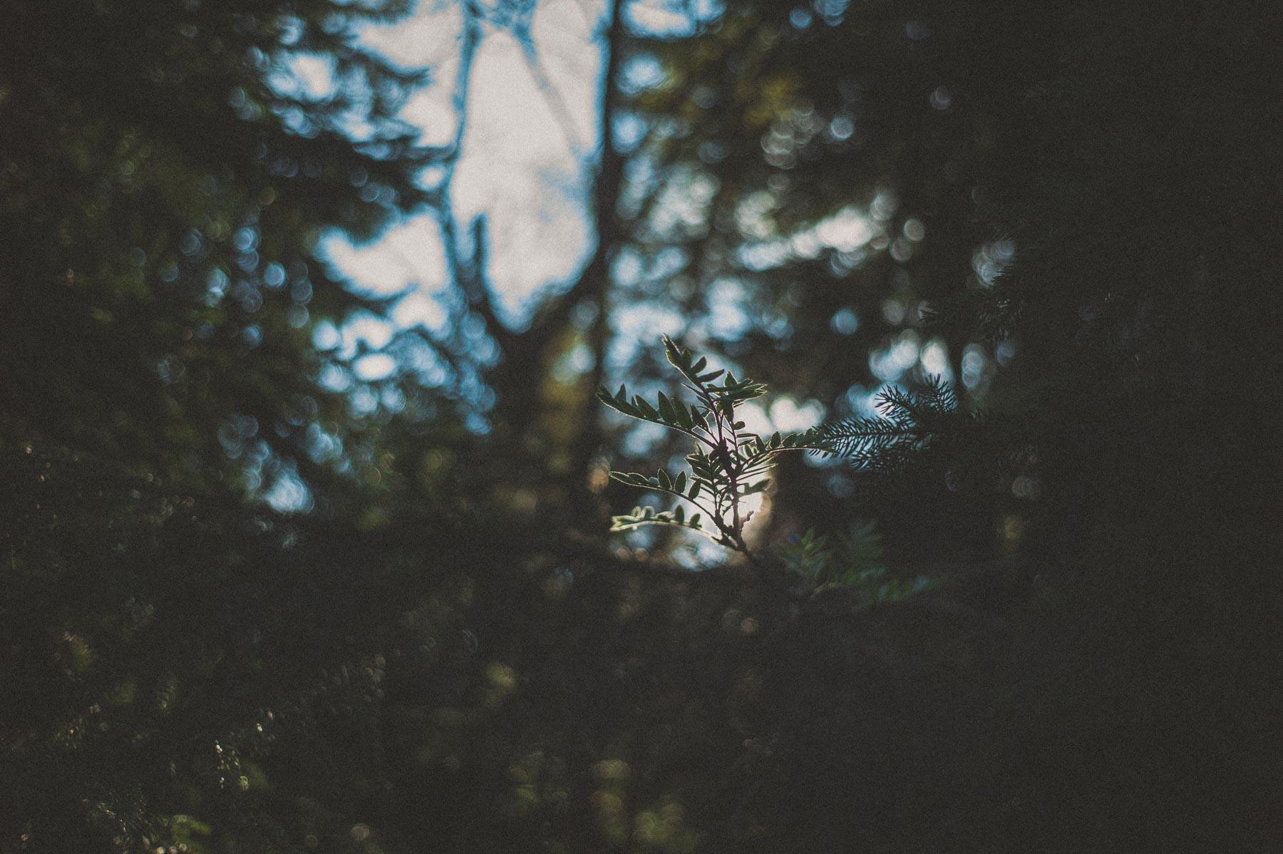 wolf_20140423_040