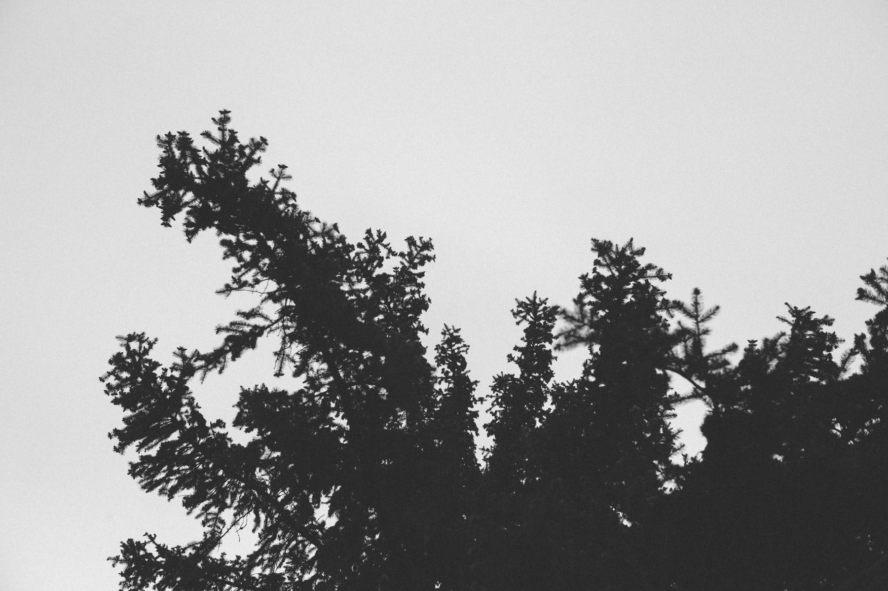 wolf_20150505_011