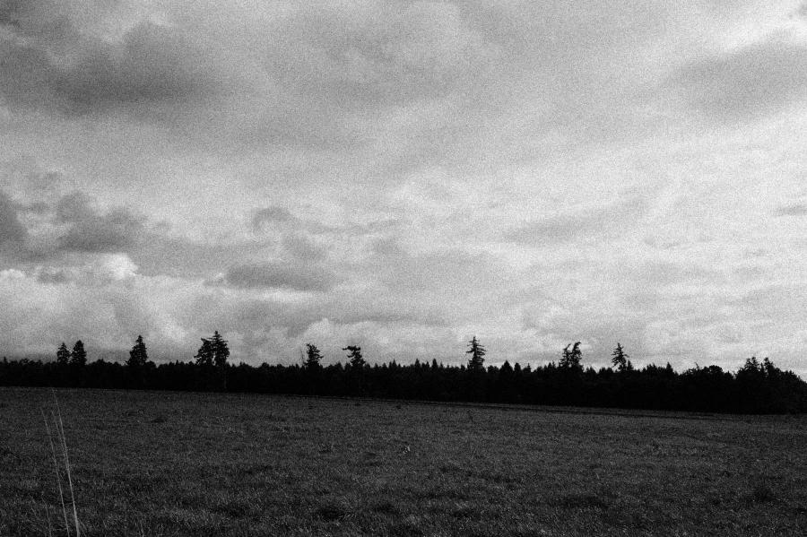 Schwarzweiß Foto mit Wald und Feld